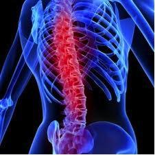 blue spine