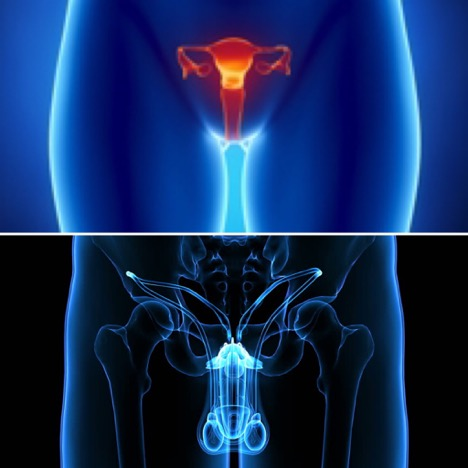 Energetic Reproductive System Cleanse